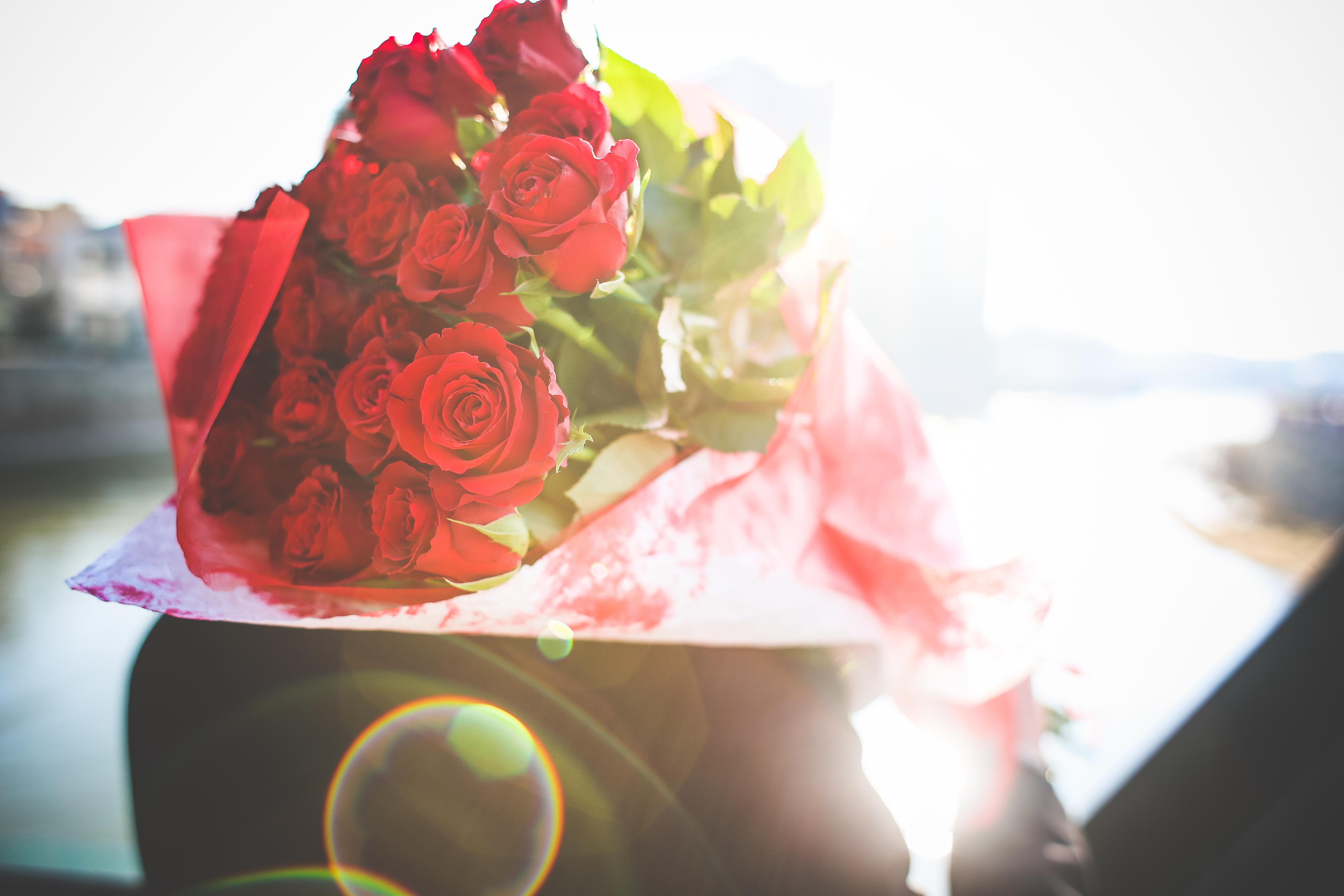 bouquet-of-roses-in-sunbeams-picjumbo-com